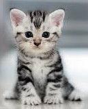 我是只可爱的猫😺