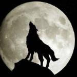 你是人是狼