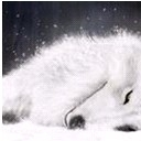 Warm☀特灰狼